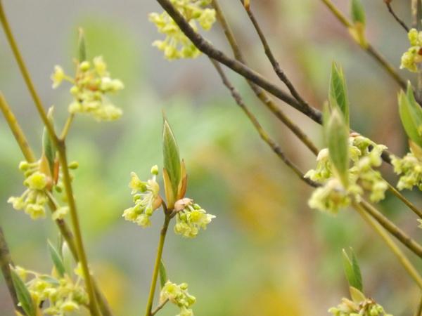 kuromoji150405